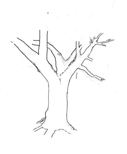 yew-drawing-3.jpg