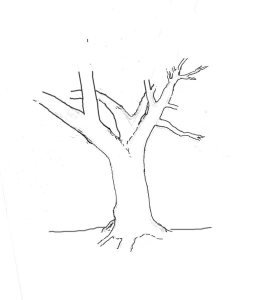 yew-drawing-4.jpg