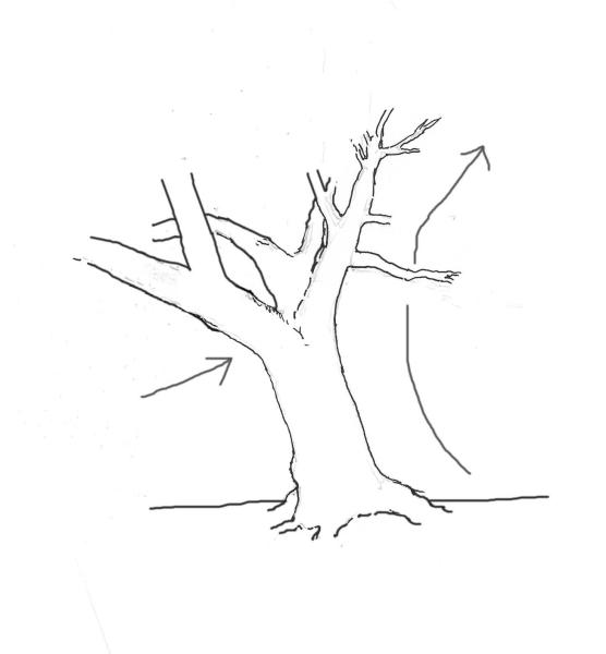 yew-drawing-5.jpg