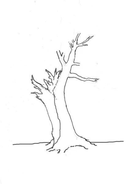 yew-drawing-6.jpg