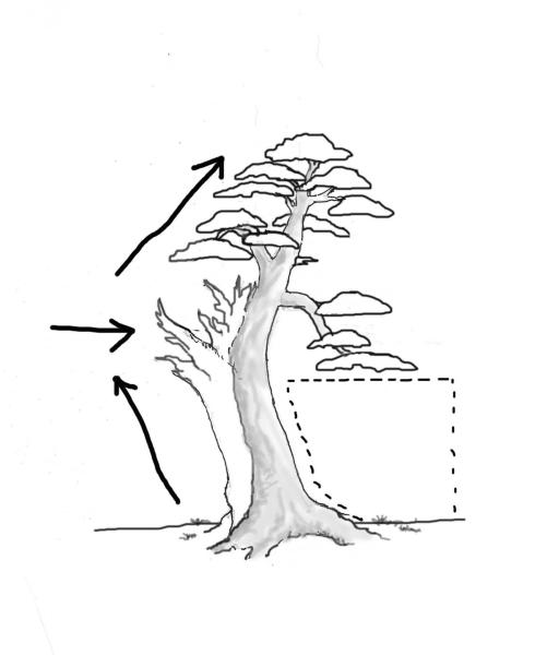 yew-drawing-7.jpg
