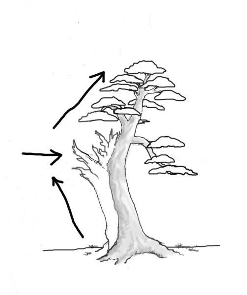 yew-drawing-8.jpg