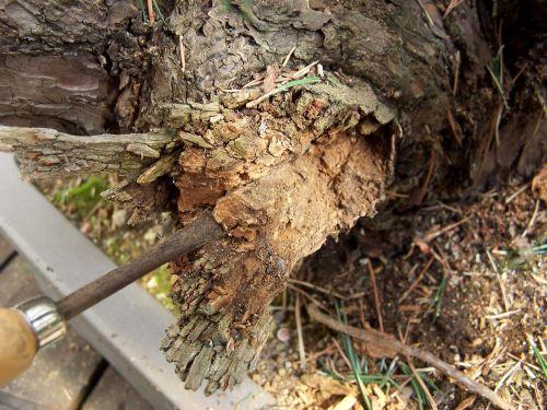 29-3-2009-085-web-hans-van-meer