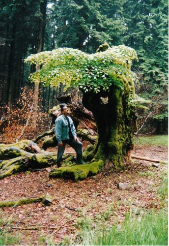 "This picture was shot in early 2000 during a weekend trip I took to the Belgium Ardennes. This old ""European Beech"" Fagus sylvatica had grown for many centuries, wile around it the scenery completely changed. It was surrounded by thousand of fur trees, that were planted there for there timber. The only open spaces that were left, were the roads that the forestry commission and the lumberjacks used for there work. And were 4 off these open roads met, this old lonely tree was growing. Just a few weeks, before this pictures made, this part of Europe was hid by a big storm. And these open roads surrounded by those high fur trees, must have channeled all the force of this storm, right on to this devensles old tree! After all these years of surviving a changing environment, this big lonely tree collapsed! On the left you can see some of the remaining of the once so tall and proud tree. But mother nature felt sorry for this big guy and helped it to grow new branches on what was left off it's hollowed out trunk. Creating this wonderfull image of resilience and the will to live! I wonder if this tree still lives there all alone on the crossroads of live? As soon as I am able to, I will make the trip to Belgium to check it out!"