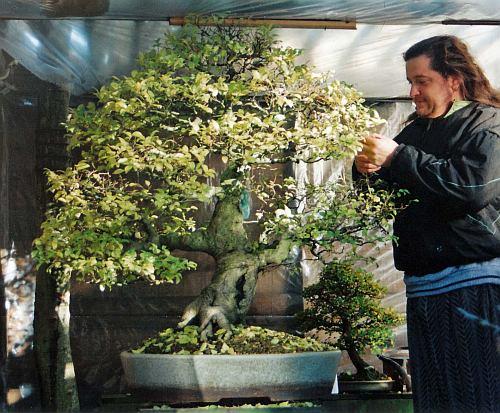 IMG_0043 Celtis chinensis Jan 2001 Hans van meer