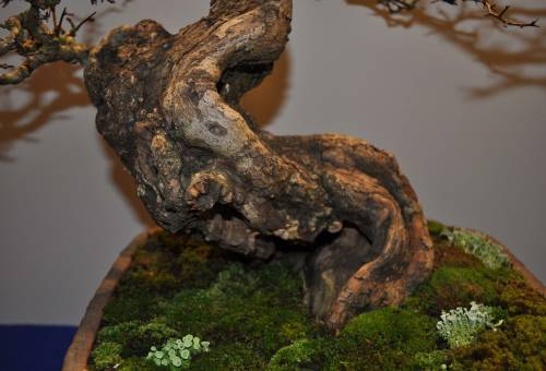 Hawthorn bark.