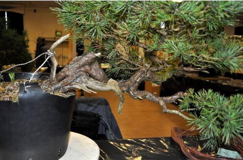 joy of bonsai 2010 040 Hans van Meer