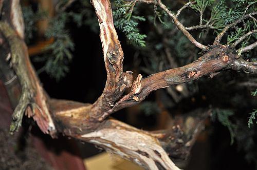 joy of bonsai 2010 041 Hans van Meer