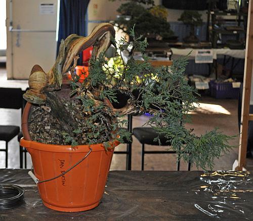 joy of bonsai 2010 053 Hans van Meer