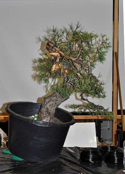 joy of bonsai 2010 054 Hans van Meer