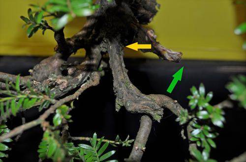 joy of bonsai 2010 113 Hans van Meer