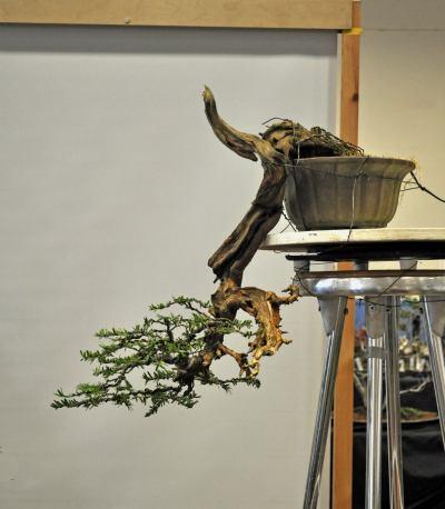 joy of bonsai 2010 124 Hans van Meer