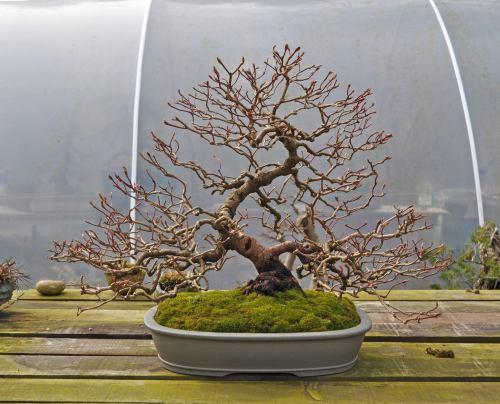 joy of bonsai 2010 134 Hans van Meer