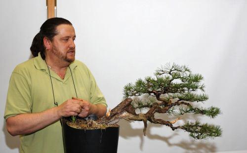 Joy of bonsai 2010 hanspi11