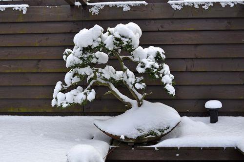 15-1-2013 sneeuw 014 Hans van Meer 500