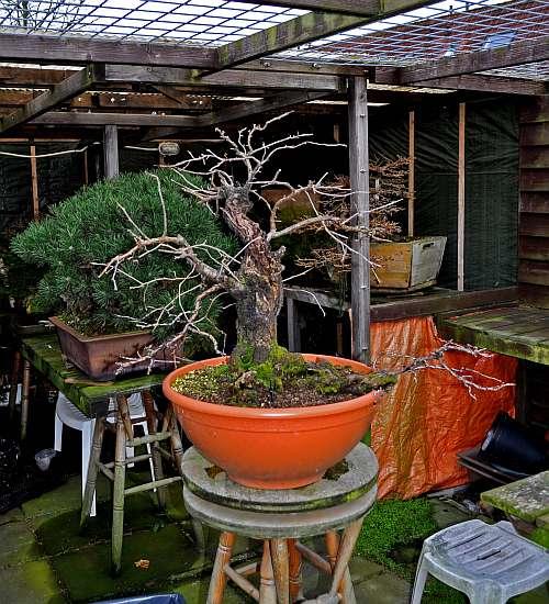 24-4-2016 Prunus mahaleb 020 hans van meer 500