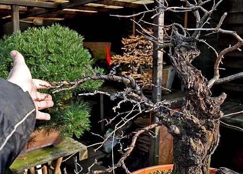 24-4-2016 Prunus mahaleb 030 hans van meer 500