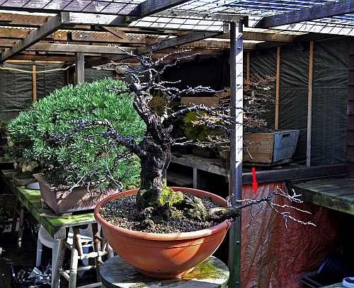 24-4-2016 Prunus mahaleb 038 hans van meer 500