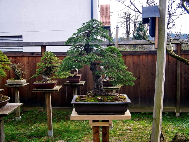 Pictures And A Video Of My Workshop At The Tora International Bonsai School In Beautiful Slovenia The Bonsai Blog Of Hans Van Meer